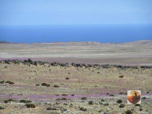 Pta.Choros-Huasco, Chile-10