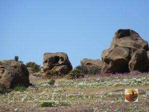 Pta.Choros-Huasco, Chile-6