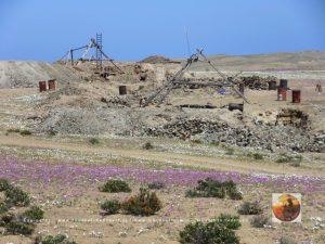 Pta.Choros-Huasco, Chile-8