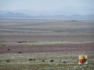 Pta.Choros-Huasco, Chile-9