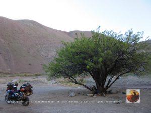 Ruta Los Loros, Chile 2015-7